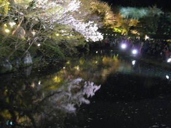 15-sakura-kyoto18.JPG
