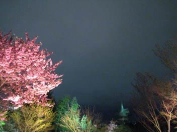 15-sakura-kyoto21.JPG