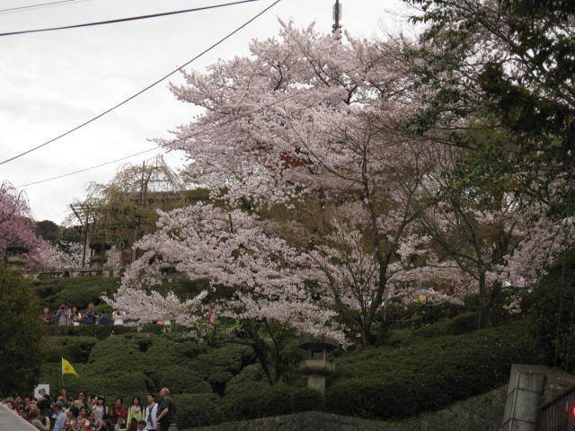 15-sakura-kyoto4.JPG