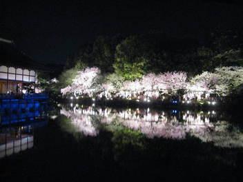 15-sakura-kyoto48.JPG