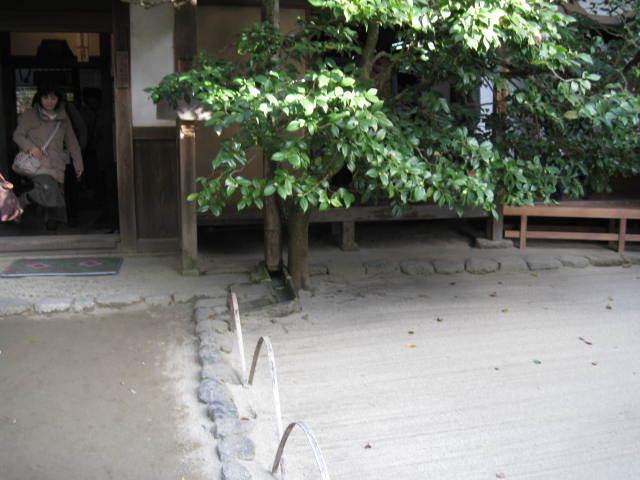 15k-koyo-kyoto45.JPG