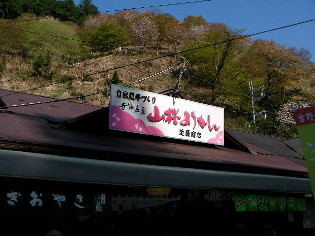 2008-yoshino-sakura1.JPG