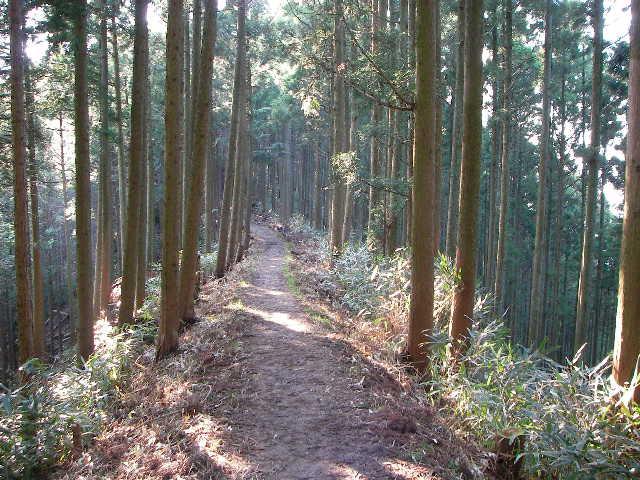 2008-yoshino-sakura13.JPG