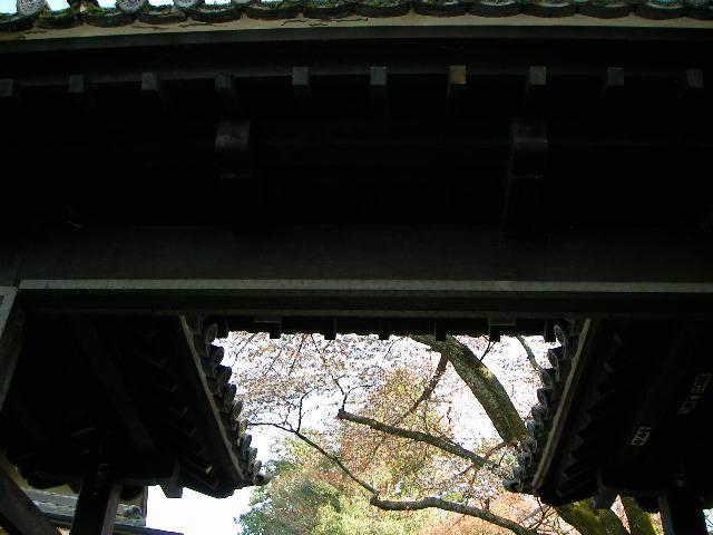 2008-yoshino-sakura5.JPG