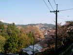 2008-yoshino-sakura9.JPG