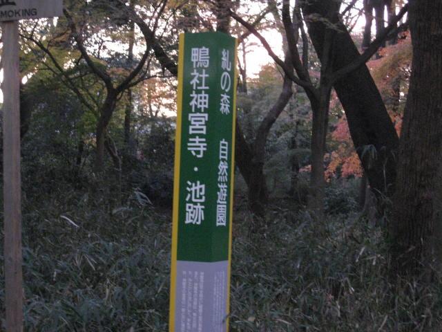 10-koyo-kyoto904.JPG