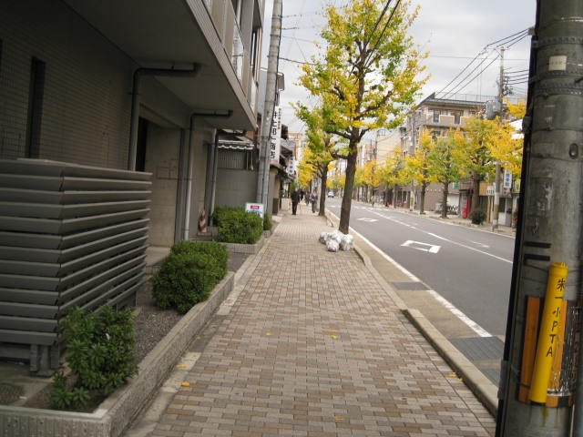 11-koyo-kyoto117.JPG