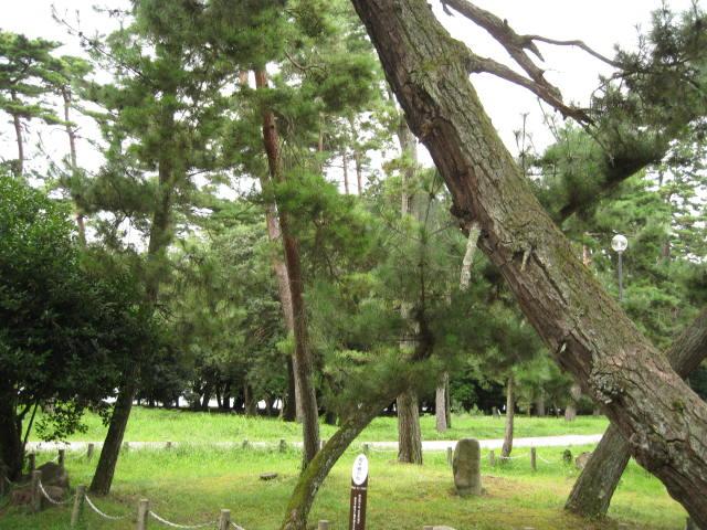 09-ama-hashi46.JPG