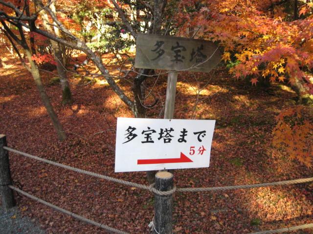 09-kyoto-koyo-273.JPG