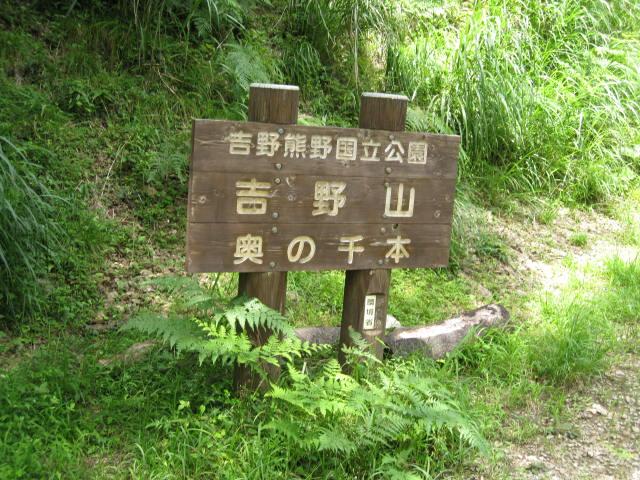 09-sum-yoshino47.JPG
