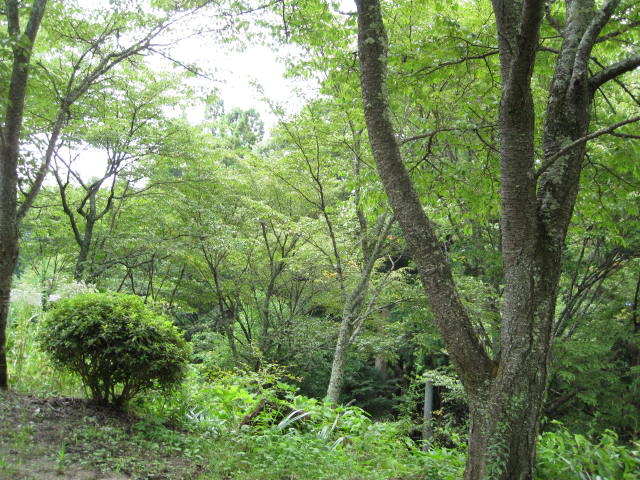 09-sum-yoshino78.JPG