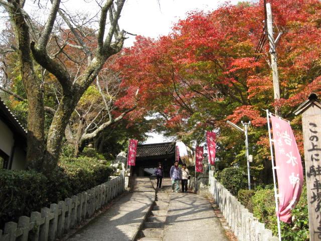 09-yoshino-koyo-30.JPG