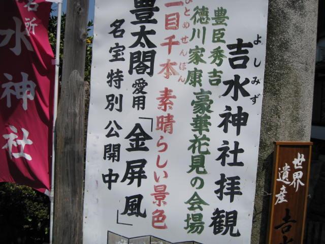 09-yoshino-sakura106.JPG