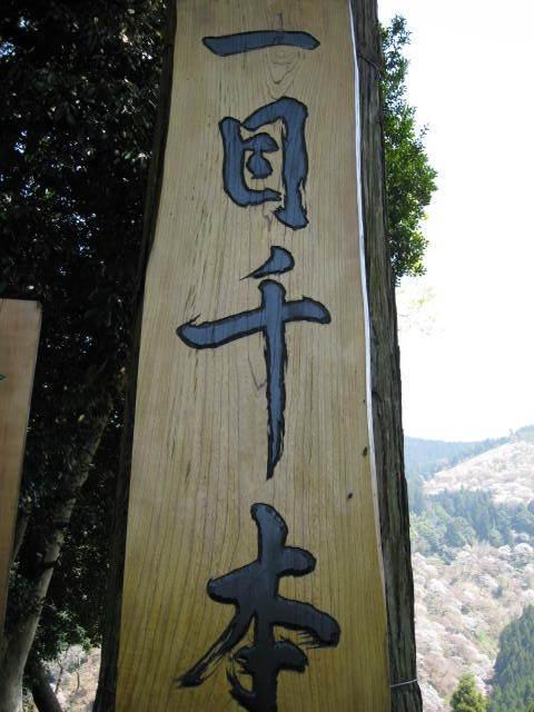 09-yoshino-sakura108.JPG