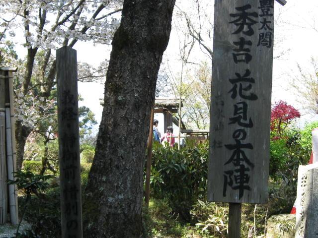 09-yoshino-sakura115.JPG