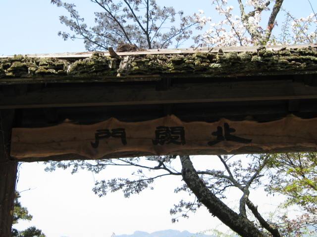 09-yoshino-sakura119.JPG