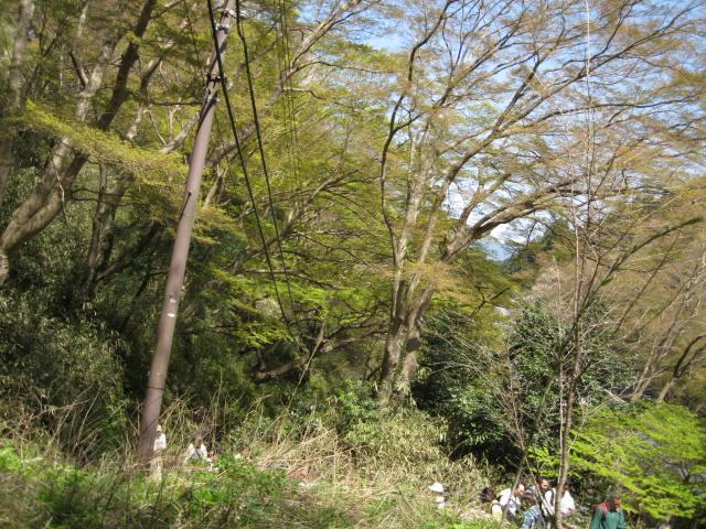 09-yoshino-sakura12.JPG