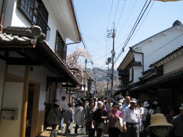 09-yoshino-sakura123.JPG