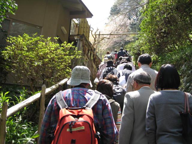 09-yoshino-sakura13.JPG