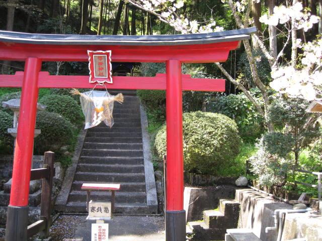 09-yoshino-sakura15.JPG