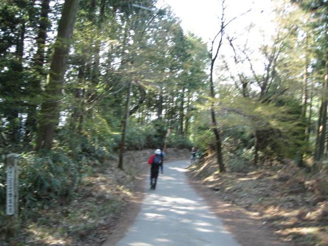 09-yoshino-sakura161.JPG