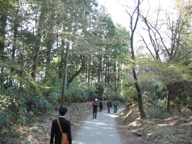 09-yoshino-sakura162.JPG