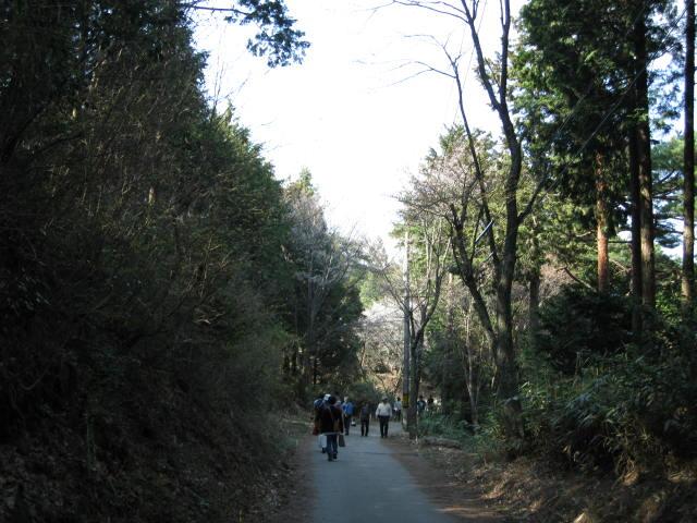09-yoshino-sakura163.JPG