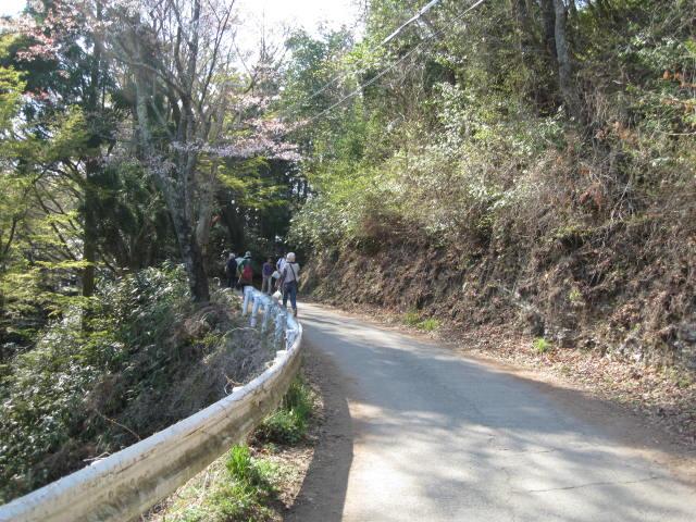 09-yoshino-sakura175.JPG