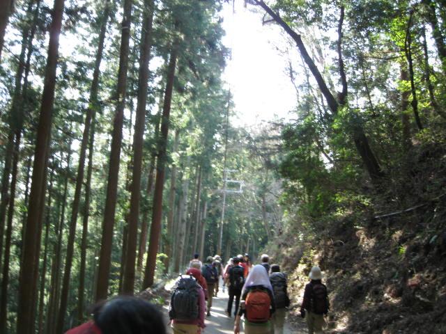 09-yoshino-sakura177.JPG