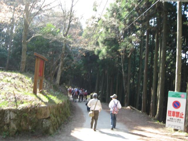 09-yoshino-sakura178.JPG