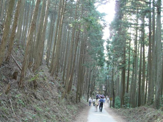 09-yoshino-sakura179.JPG