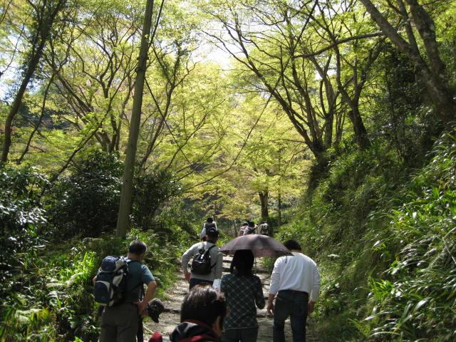 09-yoshino-sakura18.JPG