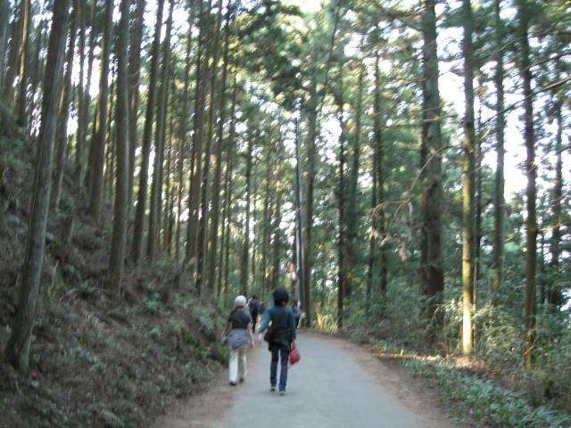 09-yoshino-sakura180.JPG