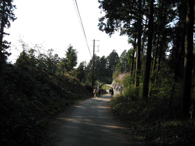 09-yoshino-sakura181.JPG