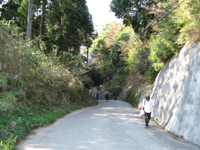 09-yoshino-sakura182.JPG