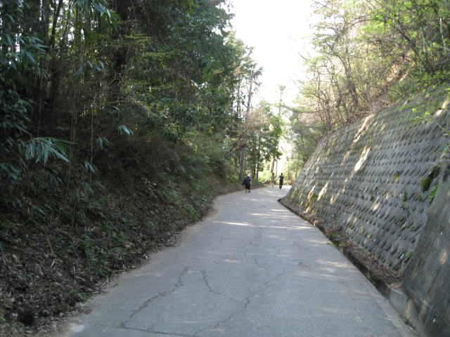 09-yoshino-sakura183.JPG