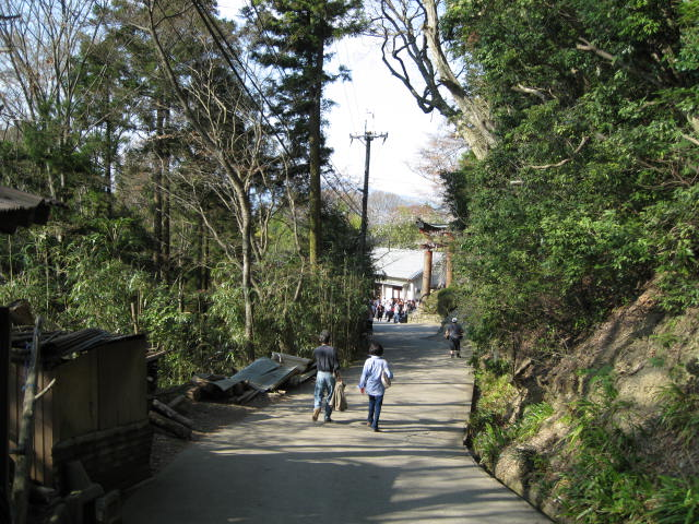 09-yoshino-sakura184.JPG