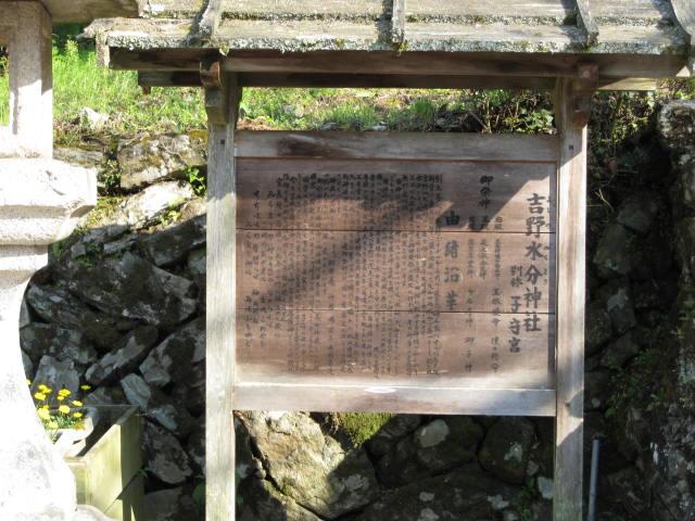 09-yoshino-sakura185.JPG