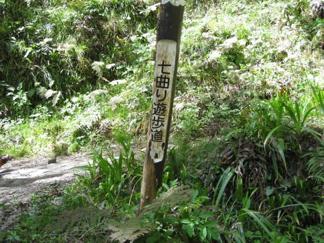 09-yoshino-sakura19.JPG