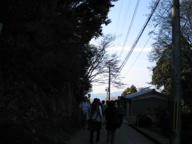 09-yoshino-sakura194.JPG