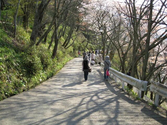 09-yoshino-sakura203.JPG