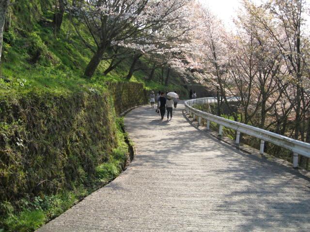 09-yoshino-sakura219.JPG