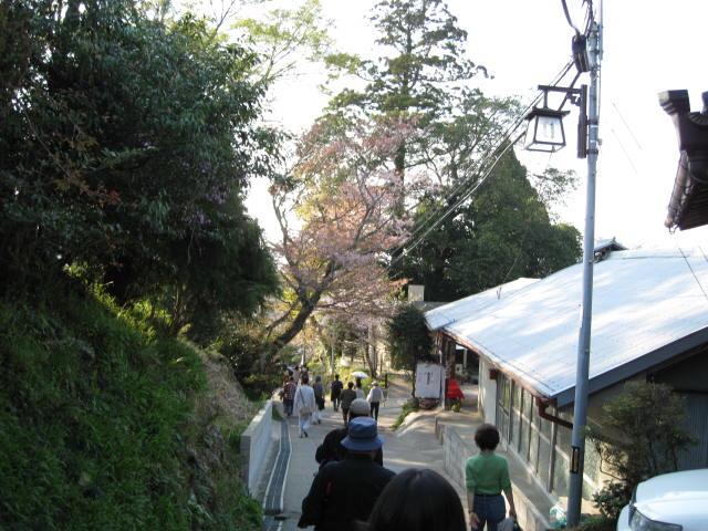 09-yoshino-sakura231.JPG
