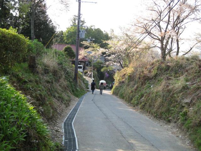 09-yoshino-sakura236.JPG