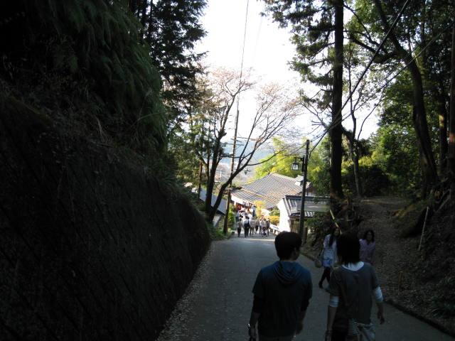 09-yoshino-sakura240.JPG