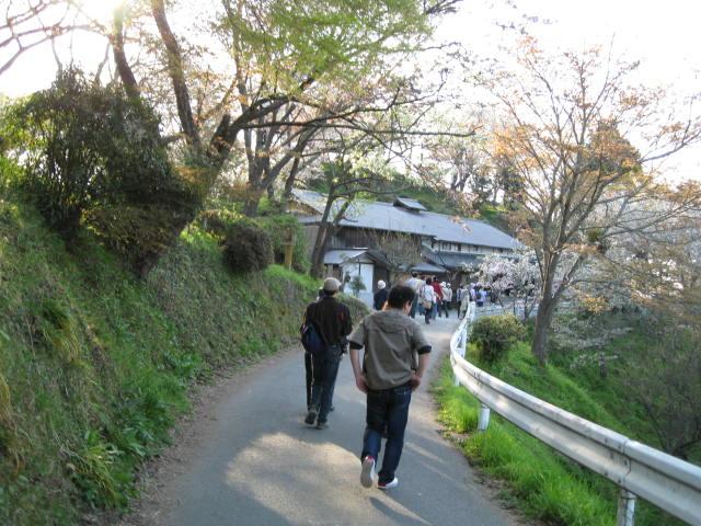 09-yoshino-sakura247.JPG