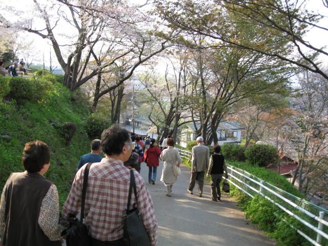 09-yoshino-sakura252.JPG