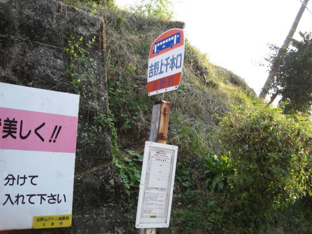 09-yoshino-sakura253.JPG