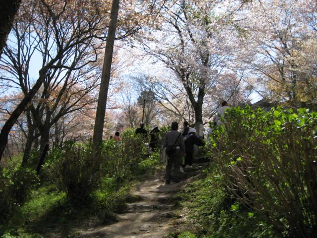 09-yoshino-sakura30.JPG