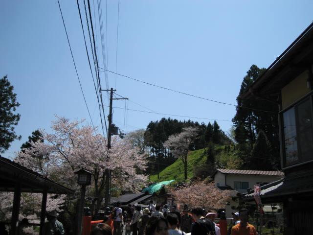 09-yoshino-sakura40.JPG